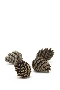 松かさ (conifer cone)の写真素材 [FYI00417070]