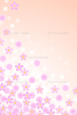 桜(Cherry Blossom)の写真素材 [FYI00417081]