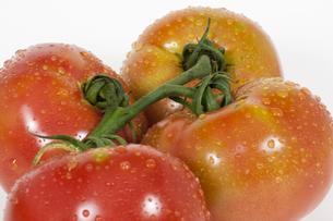 トマトの写真素材 [FYI00417112]