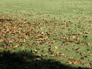 芝生と枯葉の素材 [FYI00417166]