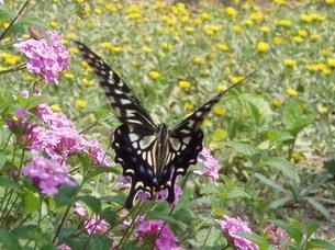 蝶々とフラワーガーデンの写真素材 [FYI00417269]