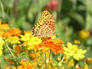 蝶々とフラワーガーデンの写真素材 [FYI00417372]