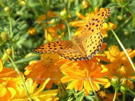 蝶々とフラワーガーデンの写真素材 [FYI00417394]