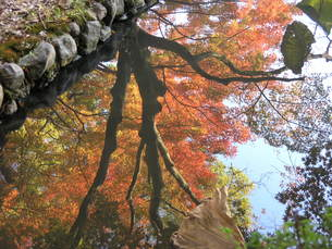 水に映った紅葉の素材 [FYI00417564]
