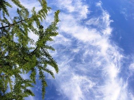 秋空と木々の素材 [FYI00417569]