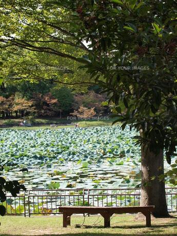 木とベンチ、池の素材 [FYI00417578]