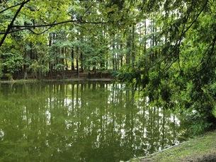 木立と池の素材 [FYI00417591]
