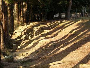 木立の影の写真素材 [FYI00417643]