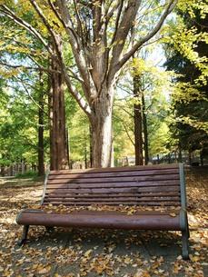 秋の停留所のベンチの写真素材 [FYI00417661]