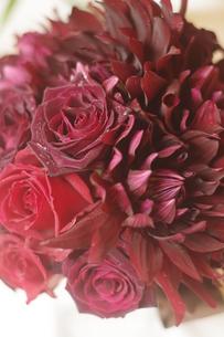 真紅 flowerの写真素材 [FYI00417710]