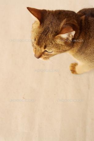 ネコの見てるものの写真素材 [FYI00417714]