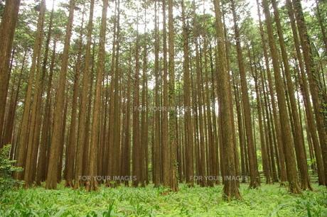 森もりの写真素材 [FYI00417727]