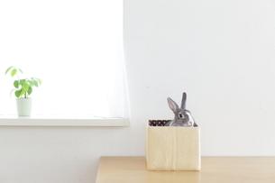 箱とうさぎの写真素材 [FYI00417780]