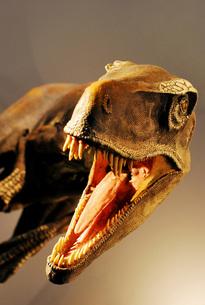 ティラノザウルスの写真素材 [FYI00417788]