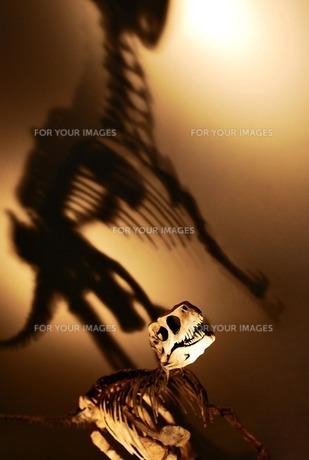 恐竜の骨の素材 [FYI00417793]