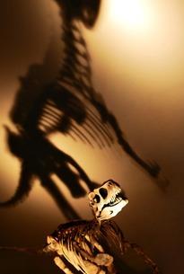 恐竜の骨の写真素材 [FYI00417793]