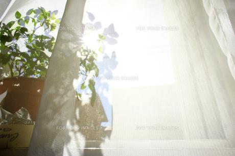 窓辺の日差しの写真素材 [FYI00417805]