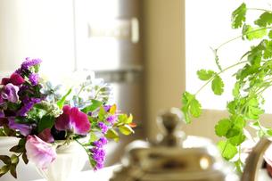 キッチン 植物のある風景の写真素材 [FYI00417815]