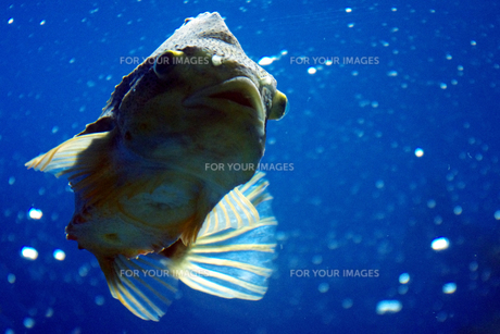 青い水槽の魚の素材 [FYI00417851]