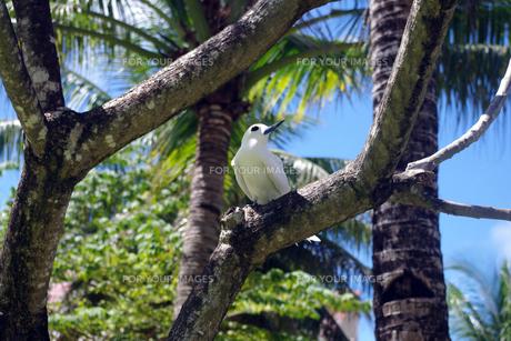 白い鳥の素材 [FYI00417931]