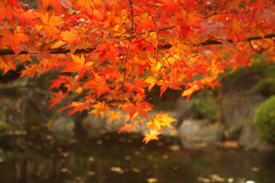 湖畔と紅葉の素材 [FYI00417941]