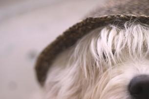 おしゃれ犬の写真素材 [FYI00417961]