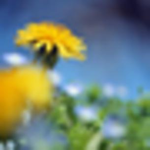 春の生命の写真素材 [FYI00417974]