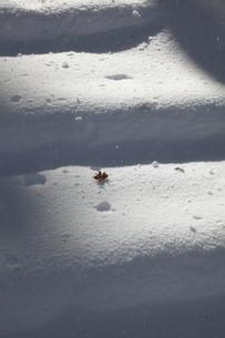 雪の階段の写真素材 [FYI00418125]