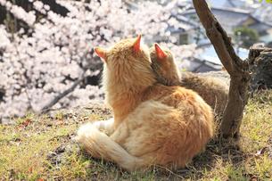 猫の親子の写真素材 [FYI00418159]