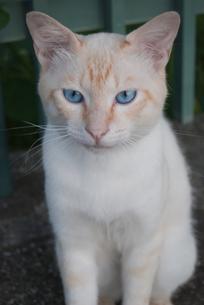 猫の写真素材 [FYI00418347]