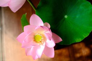 蓮の花の写真素材 [FYI00418363]