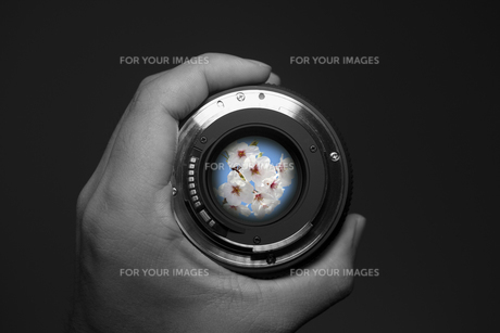 Through the Lensの写真素材 [FYI00418371]