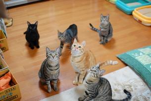 たくさんのネコの写真素材 [FYI00418394]