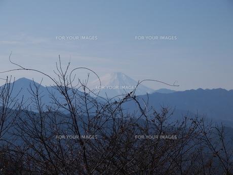 高尾山からの富士の写真素材 [FYI00418695]