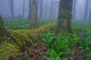 輪廻の森の写真素材 [FYI00418777]