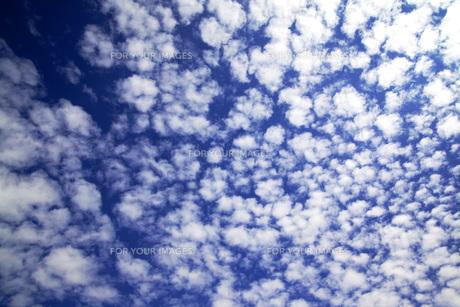 うろこ雲・青空の素材 [FYI00418861]