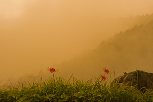 輝く秋の写真素材 [FYI00418864]