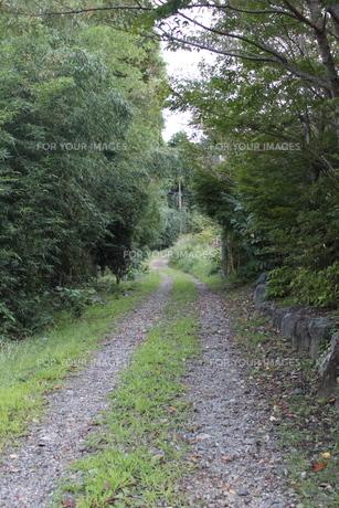 森の道の素材 [FYI00418939]