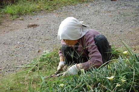 草刈りをするおばあちゃんの素材 [FYI00419065]