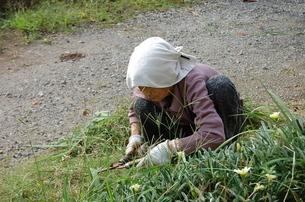 草刈りをするおばあちゃんの写真素材 [FYI00419065]