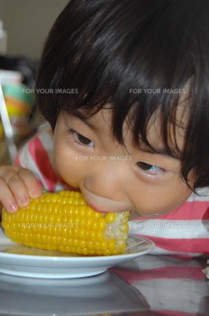 とうもろこしを食べる少女の写真素材 [FYI00419119]