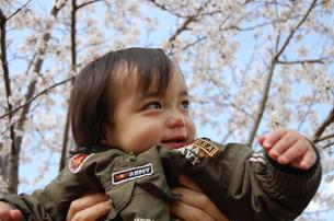 抱っこで桜を見る赤ちゃんの写真素材 [FYI00419122]