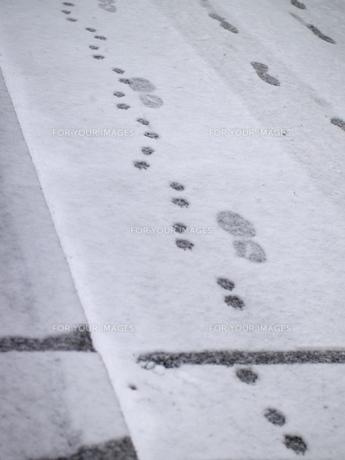 雪に付いた足跡の写真素材 [FYI00419301]