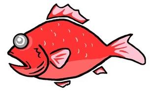 赤い魚の写真素材 [FYI00419346]