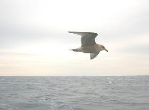 海鳥の素材 [FYI00419442]