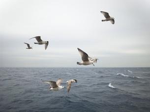 海鳥達01の素材 [FYI00419449]
