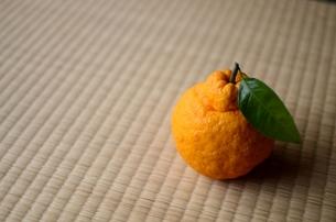 三宝柑の写真素材 [FYI00419512]