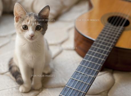 子猫とギターの写真素材 [FYI00419534]