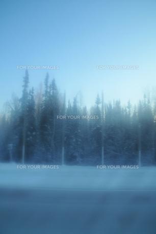 北極圏の木々の写真素材 [FYI00419603]