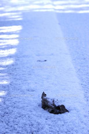 雪上の枯れ葉の写真素材 [FYI00419660]